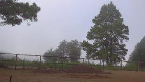 Foggy Rural Landscape. Tenerife, Spain stock footage