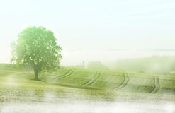 Foggy rural landscape in the morning Stock Photos