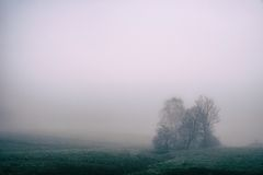 Foggy Scene in a Green Hilly Landscape With Bare Trees Stock Image