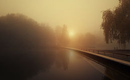 Foggy scene in the park Royalty Free Stock Photo