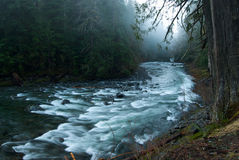 Foggy Scene on the Sol Duc River Royalty Free Stock Images