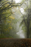 Foggy scenery Royalty Free Stock Photo