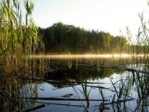Foggy scenery royalty free stock photography