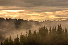 Foggy scenery morning Royalty Free Stock Photo