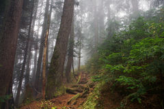 Foggy shot in the forest of Mount Seymour, British Columbia, Canada Stock Photos
