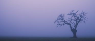 Foggy silhouette tree Stock Images