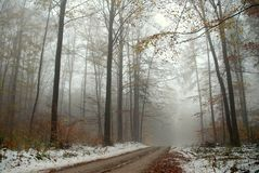 Foggy Snow Scene. Roadway into forest is shrouded in fog. A light snow cover is visible in this late autumn landscape Royalty Free Stock Image