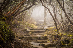 Foggy Spooky Mystical Rhododendron Trail Blue Ridge Parkway NC Royalty Free Stock Image