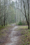 Foggy spring landscape with footpath in woods Royalty Free Stock Photos