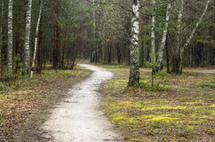 Foggy spring landscape with footpath in the woods Royalty Free Stock Images