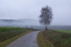 Foggy spring landscape Stock Image