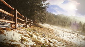 Foggy spring morning. Mist flows between firs. Tatra Mountains Stock Images