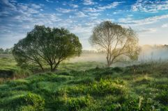 Foggy spring morning stock photo