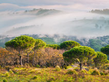 Foggy spring morning in the Sicilian mountains Stock Photo
