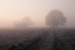 Early morning. Fog in valley Stock Image