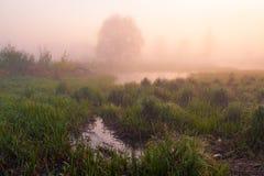 Spring sunlight. Morning fog sunlight Stock Photo