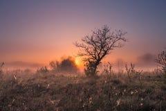 Spring fog. Fog in valley Stock Images