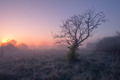 Tree with sun. Sunrise in valley Royalty Free Stock Image