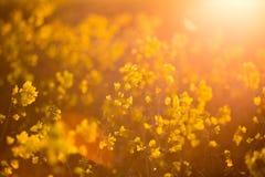 Spring flowers. Warm spring morning Stock Image
