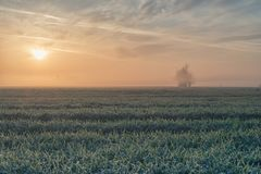 Foggy sunrise on grain field Stock Photography