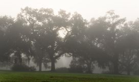 Foggy St. Francisville morning royalty free stock photos