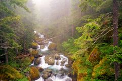 Foggy stream in Glacier National Park Royalty Free Stock Images