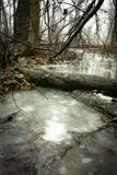 Foggy stream. royalty free stock images