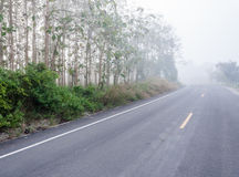 Foggy street Stock Photos
