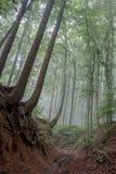 Foggy Summer Forrest Stock Photo