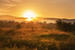 Foggy summer landscape, sun is rising over the golden sunny dewy meadow stock photography