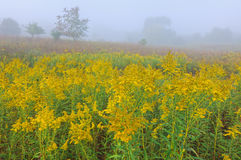 Foggy Summer Meadow Stock Images