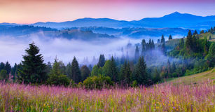 Foggy summer morning in the Carpathian mountains Royalty Free Stock Image