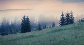 Foggy summer morning in Carpathian mountains. Royalty Free Stock Photos