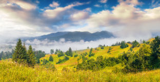 Foggy summer morning in the Carpathian mountains Royalty Free Stock Photos