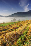 Foggy summer morning in High Tatras (Vysoké Tatry) Stock Image