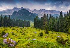 Foggy summer morning in the italian Alps Royalty Free Stock Images