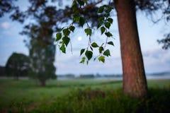 Foggy summer morning landscape Royalty Free Stock Photography