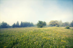 Foggy summer morning in the mountain Stock Images