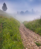 Foggy summer morning in mountains. Stock Photos