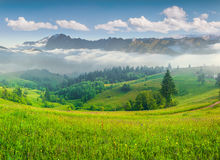 Foggy summer morning in mountains Royalty Free Stock Images