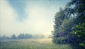 Foggy summer morning in the mountains Royalty Free Stock Images