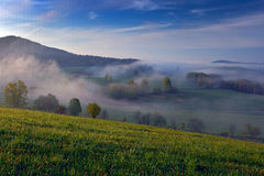 Foggy summer morning in the mountains. Green tree on the hill with fog. Tree from Sumava mountain, Czech Republic. Fog in the land Royalty Free Stock Photography