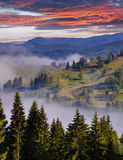 Foggy summer morning in the mountains. Stock Image