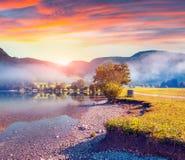 Foggy summer morning in the Stara Fuzina village park Royalty Free Stock Photography