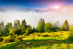 Foggy summer morning in the Triglav national park, near the Bohi Royalty Free Stock Image