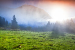 Foggy summer morning in the Triglav national park, near the Bohi Stock Images