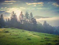 Foggy summer morning in the Triglav national park Royalty Free Stock Photo