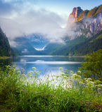 Foggy summer morning on the Vorderer Gosausee lake Stock Images