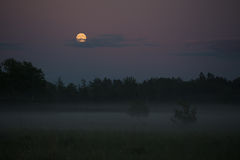 Foggy summer night Royalty Free Stock Photography