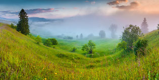 Foggy summer panorama of the foggy Carpathian mountains Stock Images